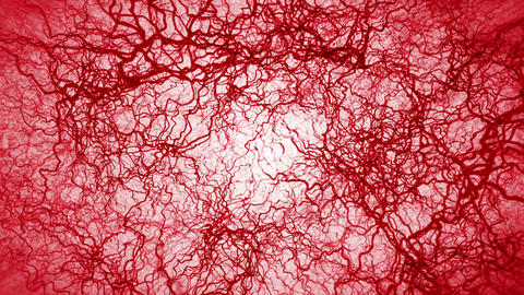 3D loop animation of human blood vessel. Red capillaries. Eye blood on white background. Anatomical Animation