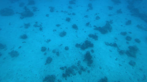 Eilat, Israel - at the depths of the Red Sea through the porthole Live Action