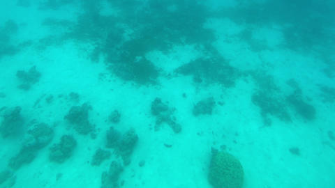 Eilat, Israel - at the depths of the Red Sea through the porthole part 4 Live Action