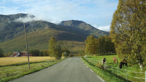 Driving a car on asphalt road in Norway with horses standing by the road in autumn Live Action