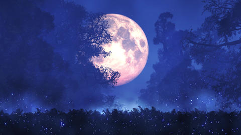 4K Romantic Magic Forest Full Moon Midnight Seamless Looping Animation Live Action