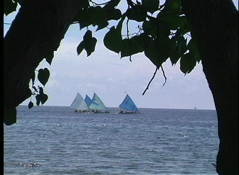 A long-shot of three sailboats, near Indonesia, with the silhouettes of two trees in the foreground Footage