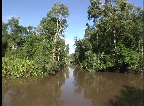 A point-of-view shot traveling along a muddy river in a rainforest Footage