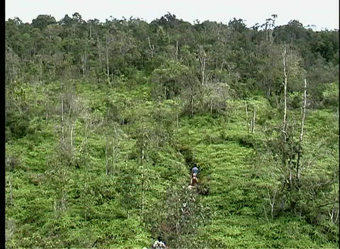 A line of people hike down a dense jungle path in a... Stock Video Footage