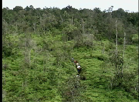 A line of people hike down a dense jungle path in a rainforest Live Action