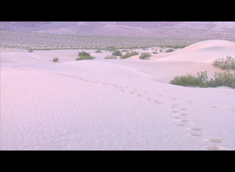 Tracks lead through deep snow in a wintry landscape Stock Video Footage