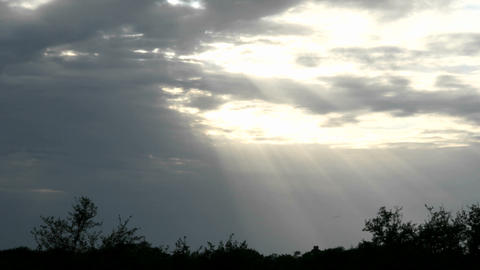 Lens flares, and sun halations appear over trees in... Stock Video Footage