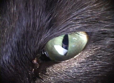 A black cat stares with its green eyes Stock Video Footage