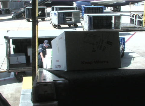 An airline worker loads boxes into a plane's cargo hold Footage