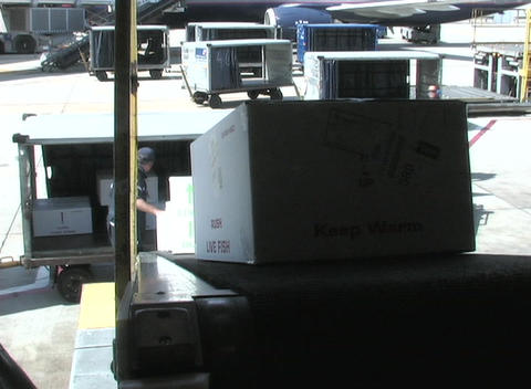 An airline worker loads boxes into a plane's cargo hold Stock Video Footage