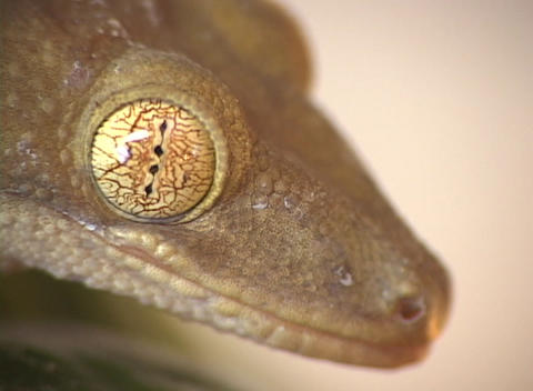 A close-up of the head of a unique lizard Stock Video Footage