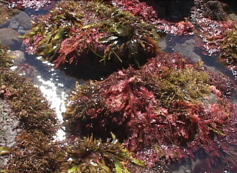 Sea plants are flooded with water as the waves come in Stock Video Footage