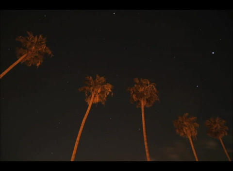 Worm's eye shot of palm-trees overlooking flashing lights in the dark as clouds flow quickly past Footage