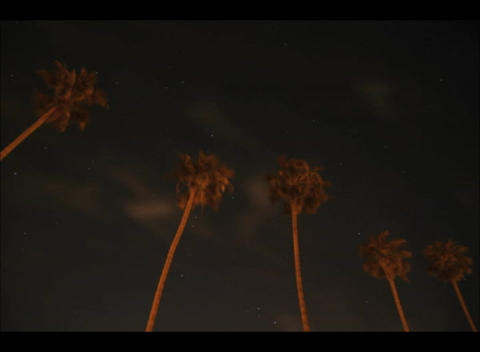 Worm's eye shot of palm-trees overlooking flashing lights... Stock Video Footage