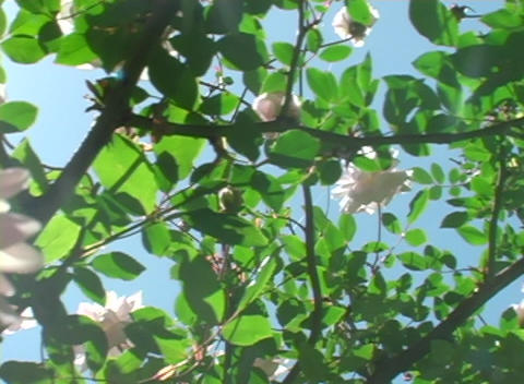 Pan-left to a pink flower nestled among green leaves Stock Video Footage