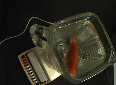 Bird's-eye view of a fish living in a blender Stock Video Footage