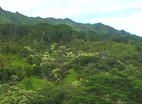 Vegetation on a lush tropical hillside reflects an... Stock Video Footage