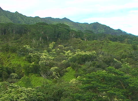 Vegetation on a lush tropical hillside reflects an infinite number of shades of green Footage