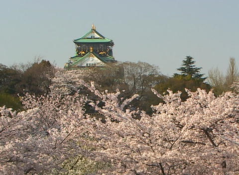 Masses of cherry blossoms add color to a temple in the... Stock Video Footage