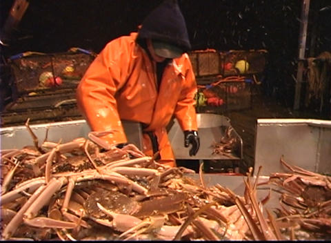 Three men work together to sort crabs into different bins Stock Video Footage