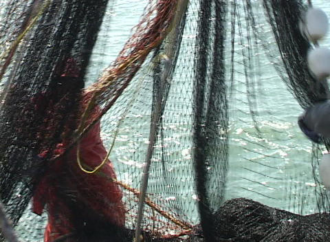 Fishermen search through a large net for any seafood catches Stock Video Footage