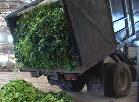 A Truck Dumps Plant Debris At A Recycling Center stock footage