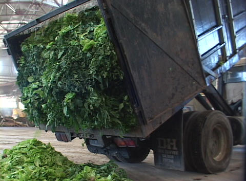 A truck dumps plant debris at a recycling center Stock Video Footage