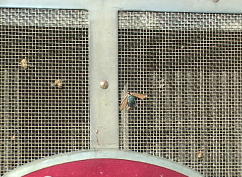 A dead bug is stuck on the grill of a large truck Stock Video Footage