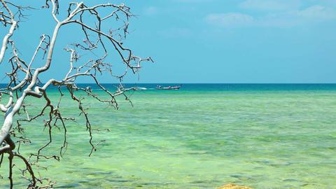 Dead Tree Branch Hangs over Rocky Tropical Beach. Video UltraHD Footage
