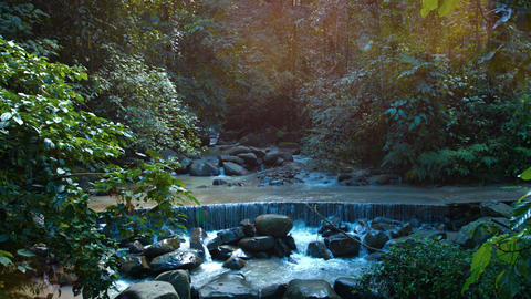 Jungle Stream Crosses a Road at a Jungle Nature Park. with Sound Footage