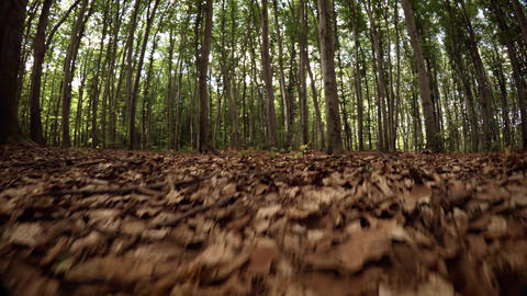 Forest Floor from the Perspective of a Small. Wild Animal Footage