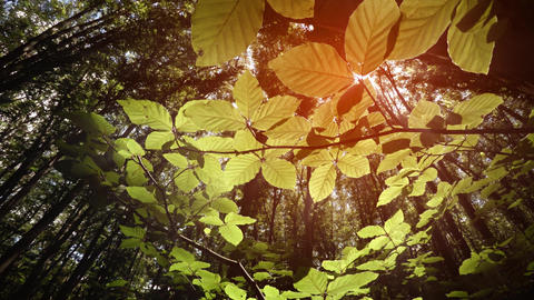 Leaves of Forest Undergrowth Illuminated by Sunshine from Above Footage