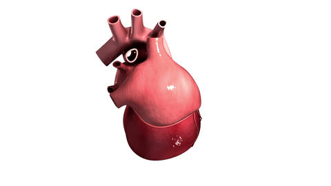 Visualization of a pulsating heart Animación