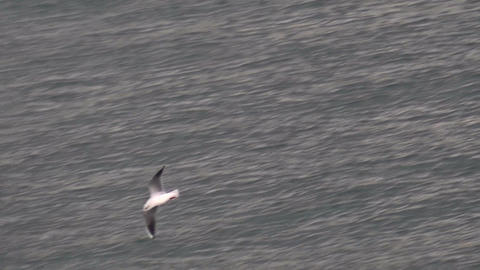 Seagull Over The Sea 2 Footage