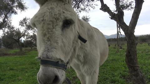 Donkey (1) Footage