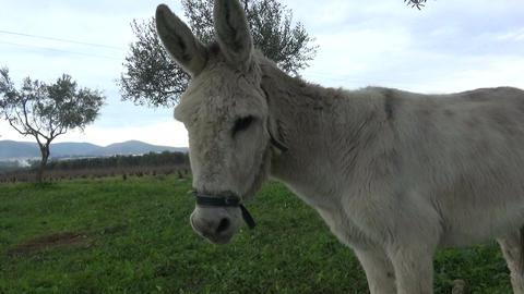 Donkey (2) Live Action