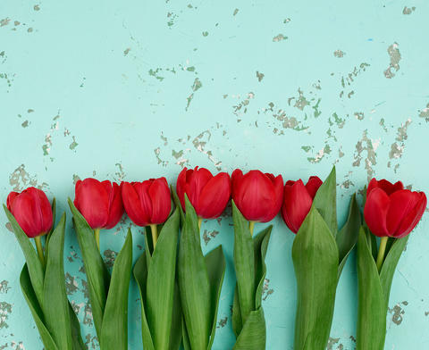 bouquet of red blooming tulips with green stems and leaves Fotografía