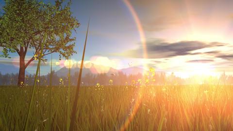 Spring landscape image, green tree, sunset Animation