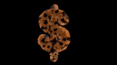 3D animated furry hairy zoo leopard text typeface with alpha channel USD L Animation