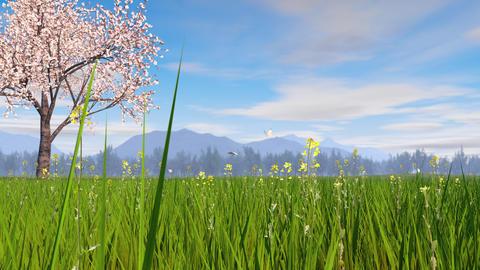 Spring landscape image, cherry blossom tree Animation