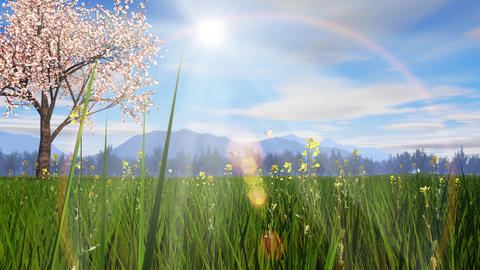 spring landscape image, cherry blossom tree, sunlight Animation