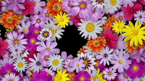 Flowers spread to form a wreath, black background Animation