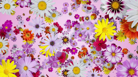 A space where flowers are floating, pink background CG動画