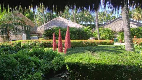 Enchanted tropical garden Live Action