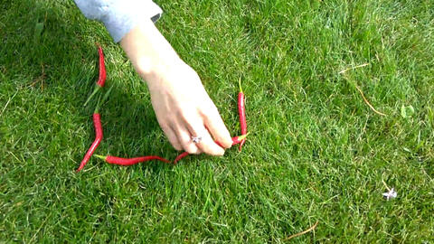 Hand and a chili pepper on green grass. timelapse Footage