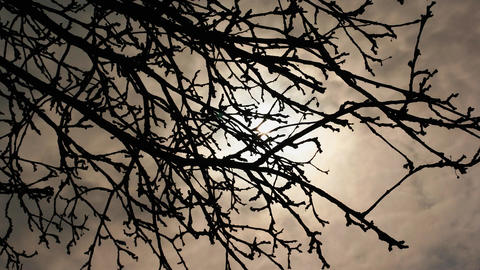 Tree branches on a cloudy day Footage