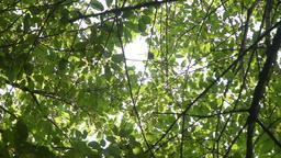 foliage Footage