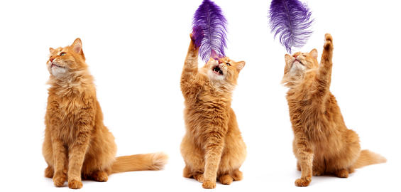 three cheerful cats isolated on white background Fotografía