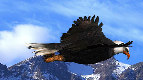 Bald Eagle Flies Against the Background of Mountains and Sky Animation Live Action