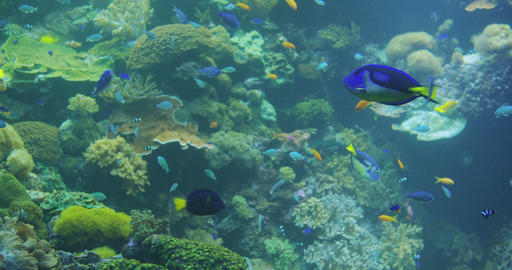Underwater Colorful Tropical Fishes. Tropical underwater sea fishes in aquarium Live Action